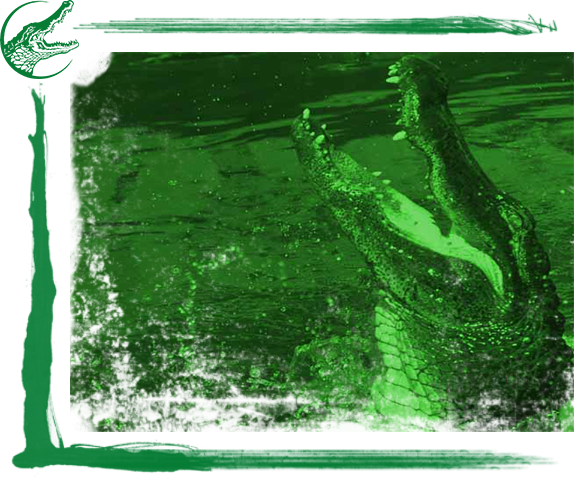 Gator Hunting Florida - Central Florida's Top Gator Hunting Outfitters!